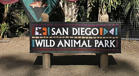 """Why San Diego Zoo?"" I asked"