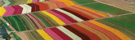 The Flower Fields, California